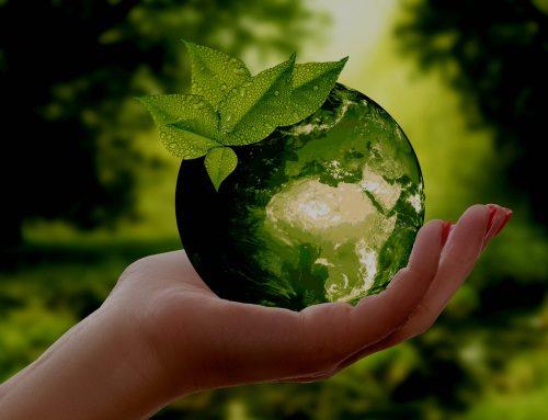 Umweltbewusste Unternehmensführung: Nachhaltigkeit & Ressourcenschonung